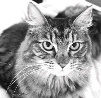 cat photo b/w debiriley.com