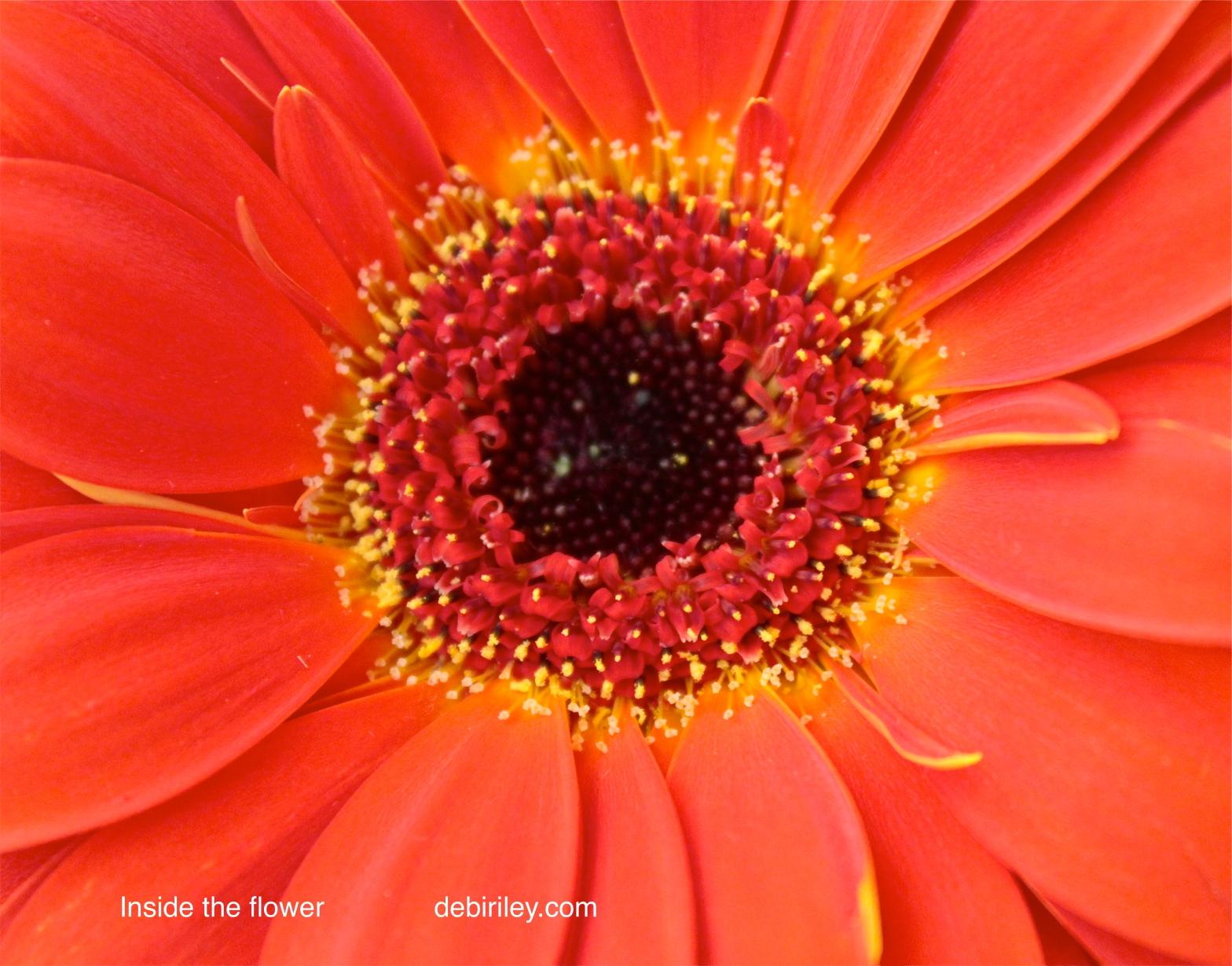 Orange Happy color, petal patterns, flower design, debi riley art, debiriley.com