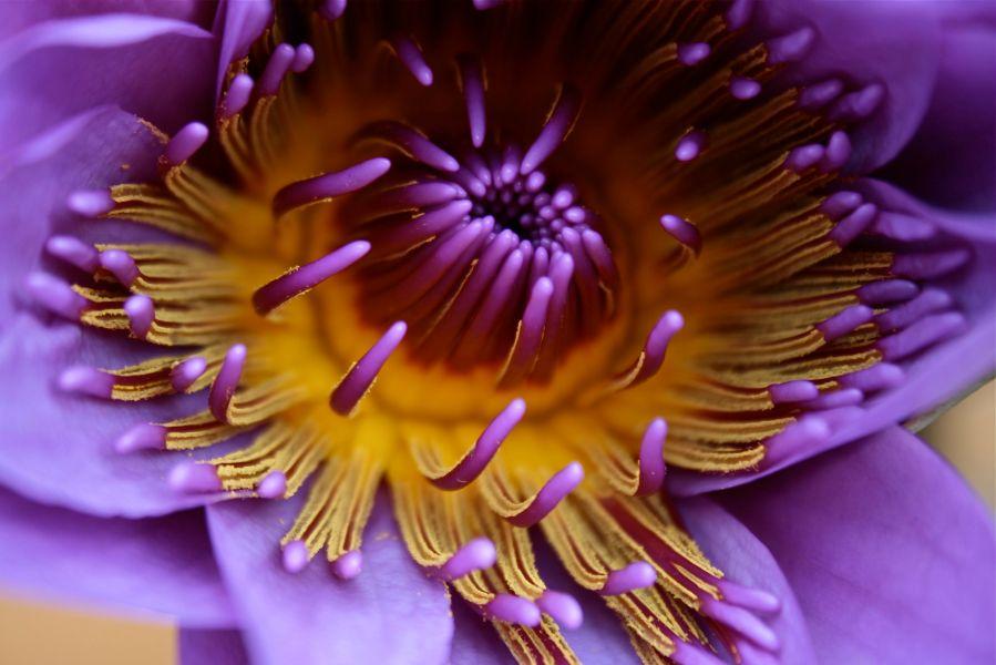 lotus debiriley.com