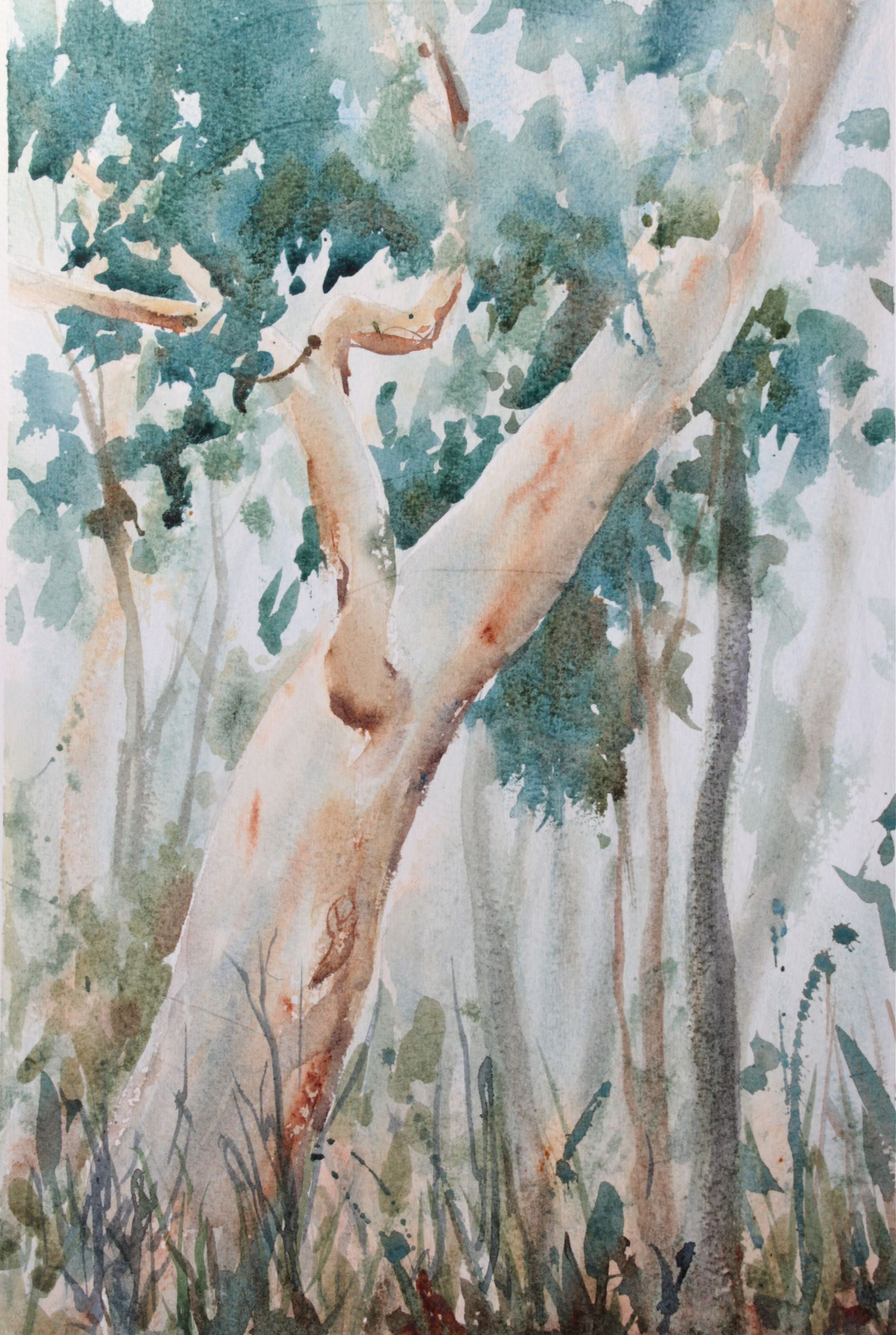 Watercolours St. Ives bushland debiriley.com