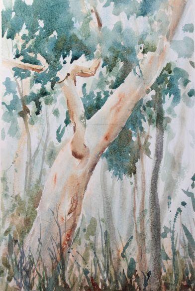 St. Ives bushland debiriley.com