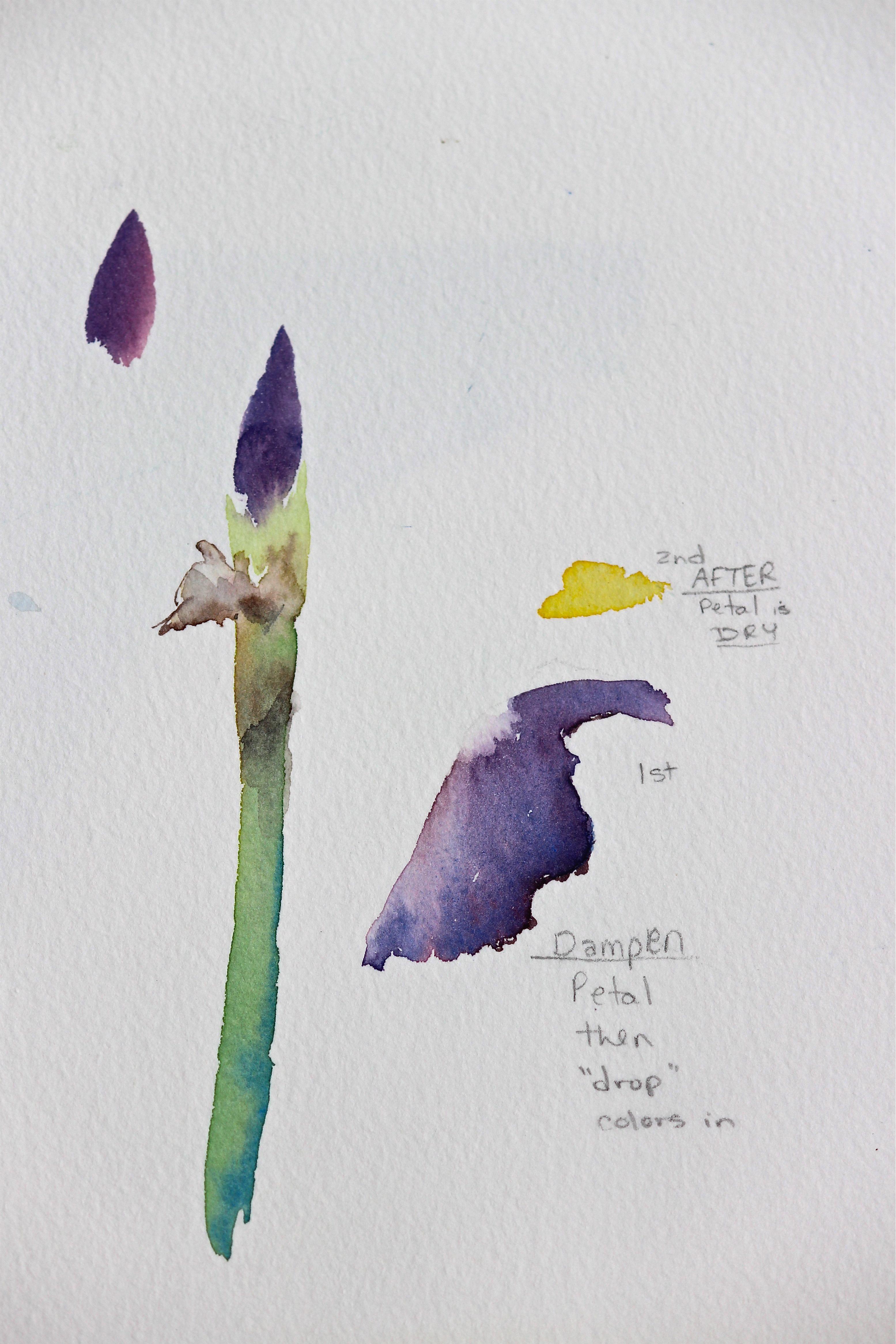watercolor beginner flowers, easy purple iris bud, step by step, debiriley.com