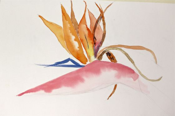 watercolor Bird of paradise, student art, debiriley.com