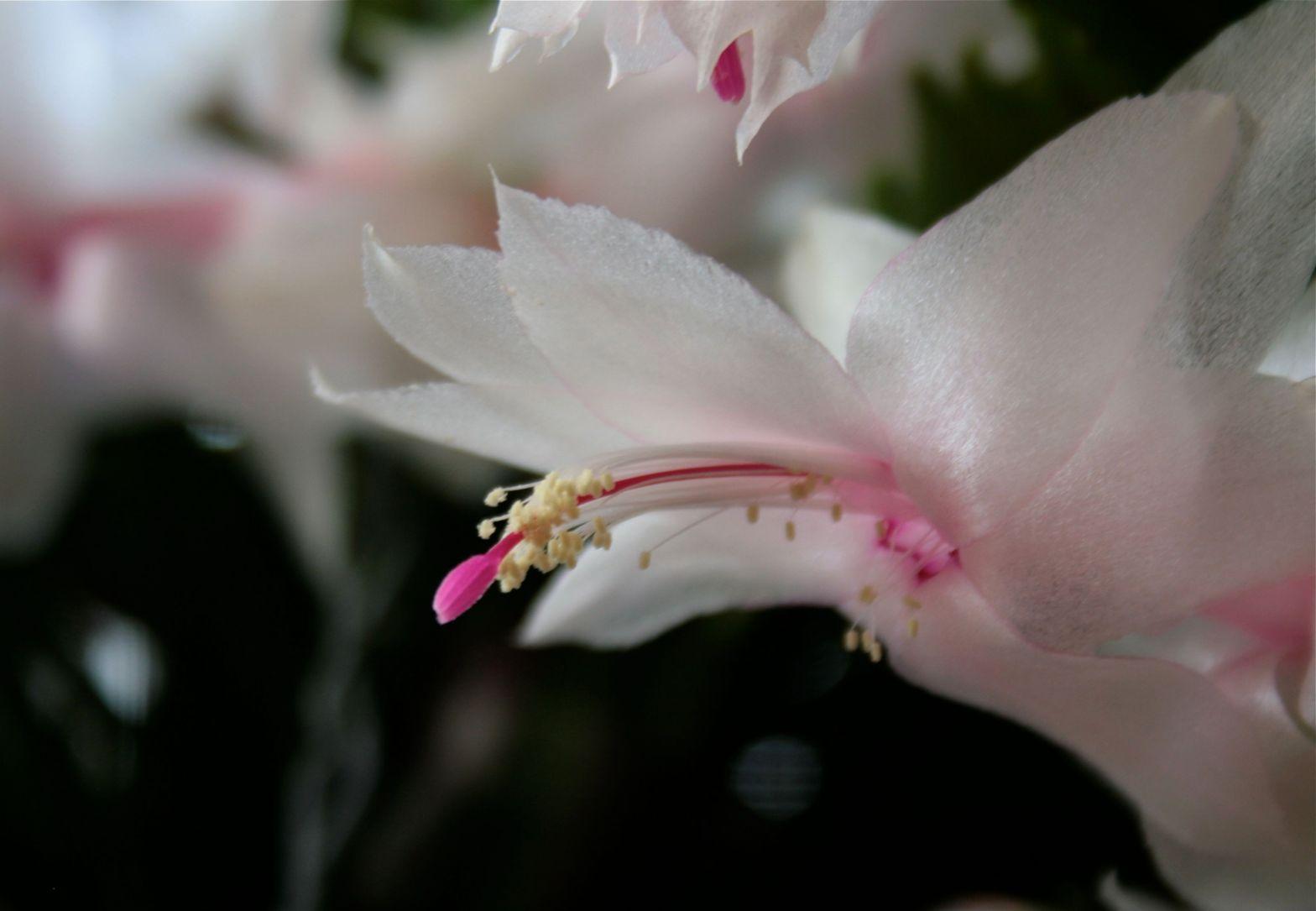 Delicate cactus bloom debiriley.com