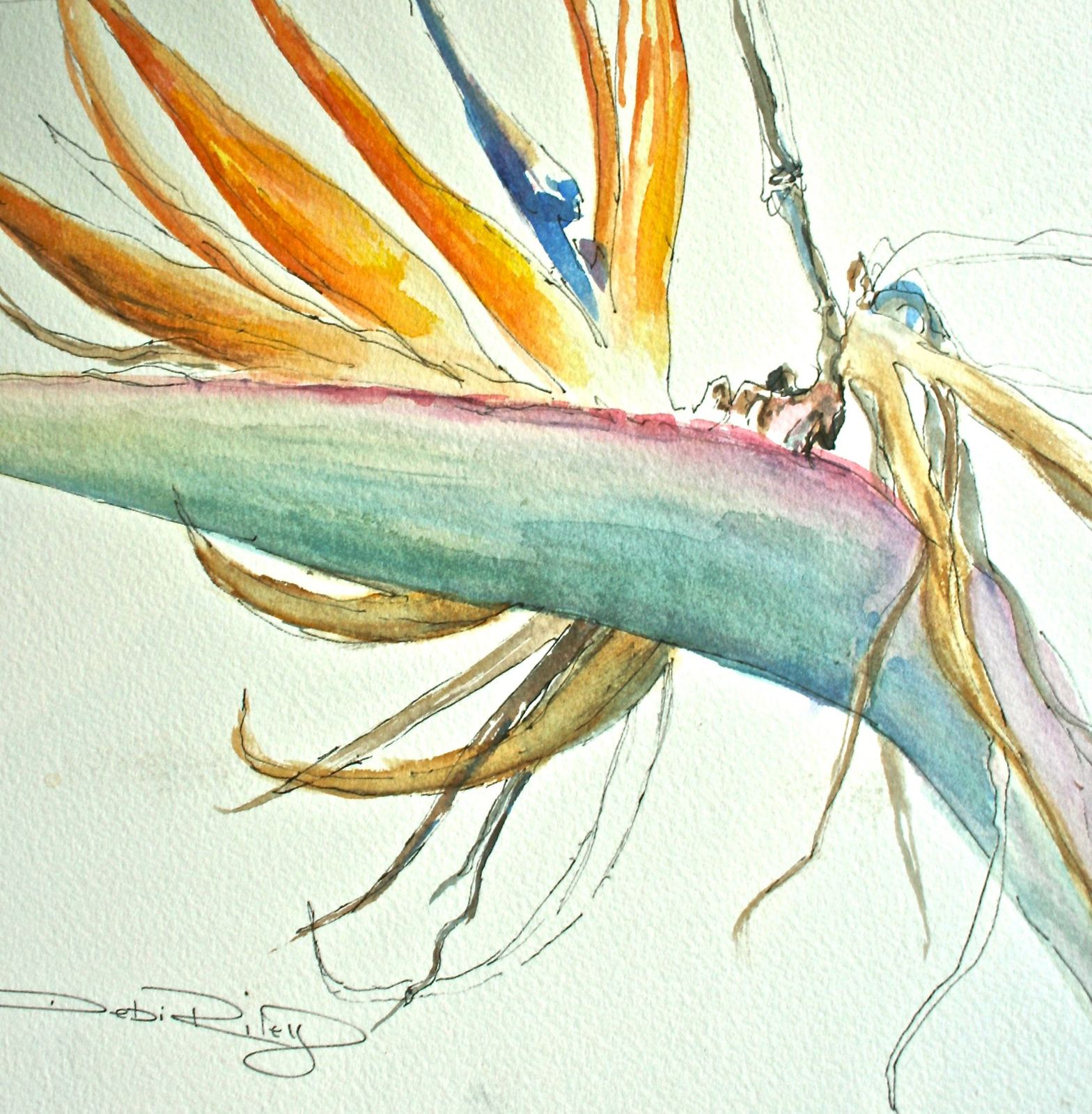 bird of paradise debiriley.com