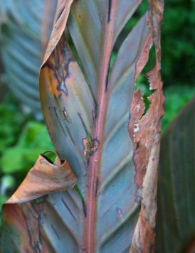 tattered leaf debiriley.com
