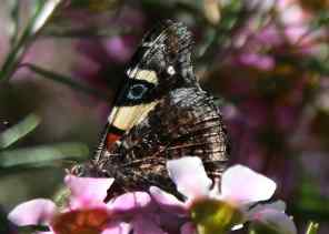 UWA campus butterfly debiriley.com