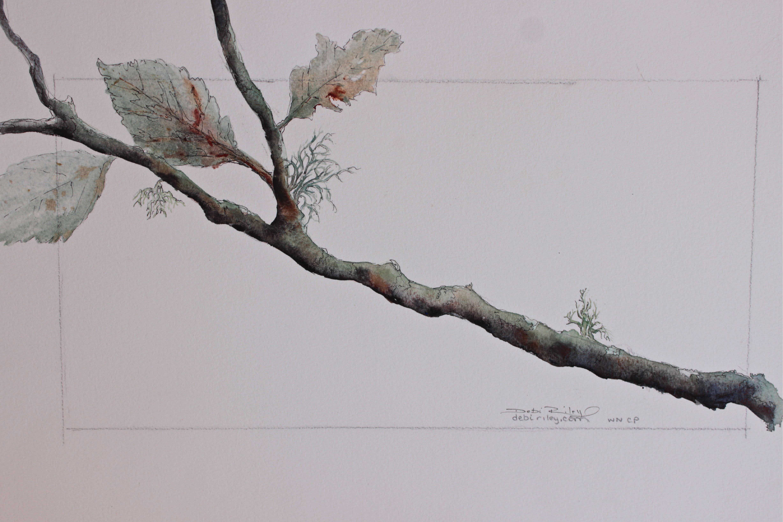 watercolor painting tree branch, debiriley.com