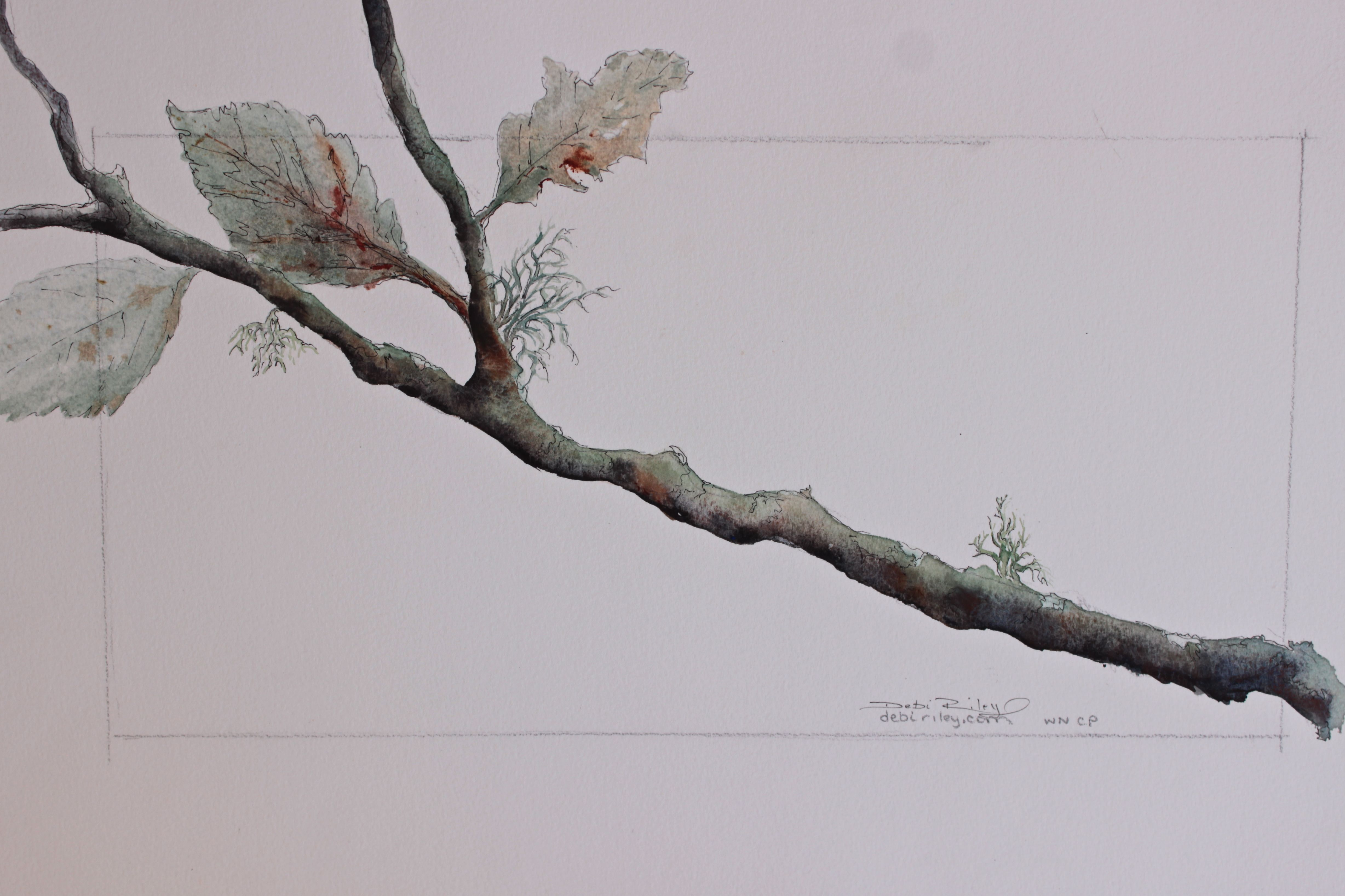 Watercolour Branch And Leaves Debi Riley