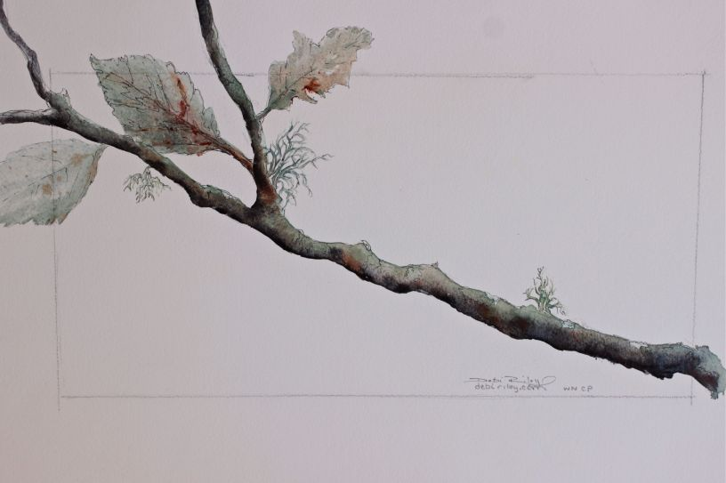 watercolor painting tree branch, debiriley.com