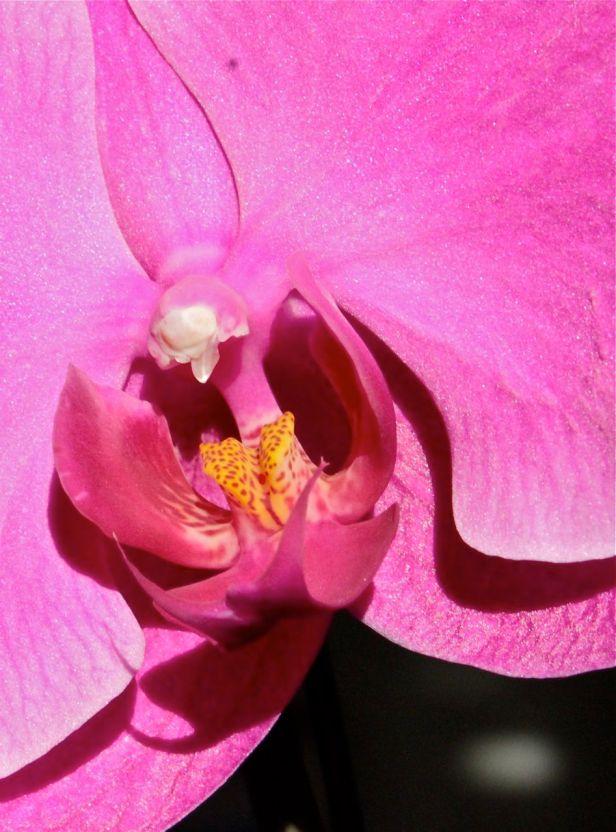 orchid in morning debiriley.com