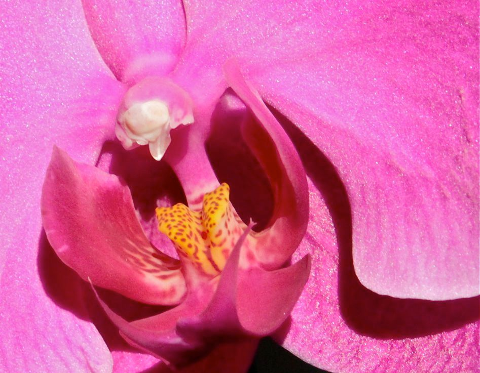 Inspired by Orchids- Watercolours andPhotographs