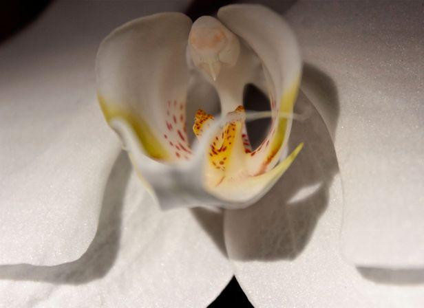 into the orchid debiriley.com
