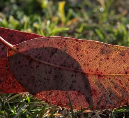 Shadow and Light of a fallen leaf debiriley.com