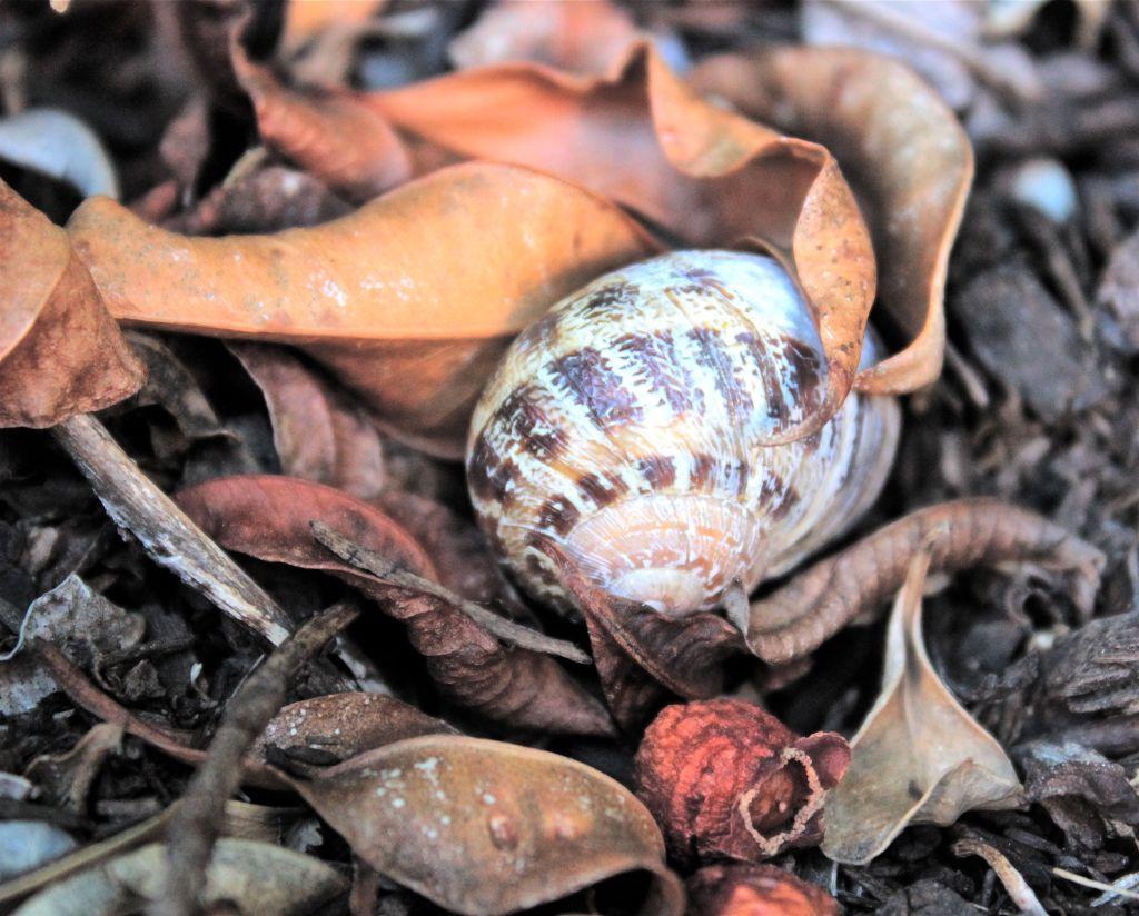 Snail amongst fallen leaves debiriley.com