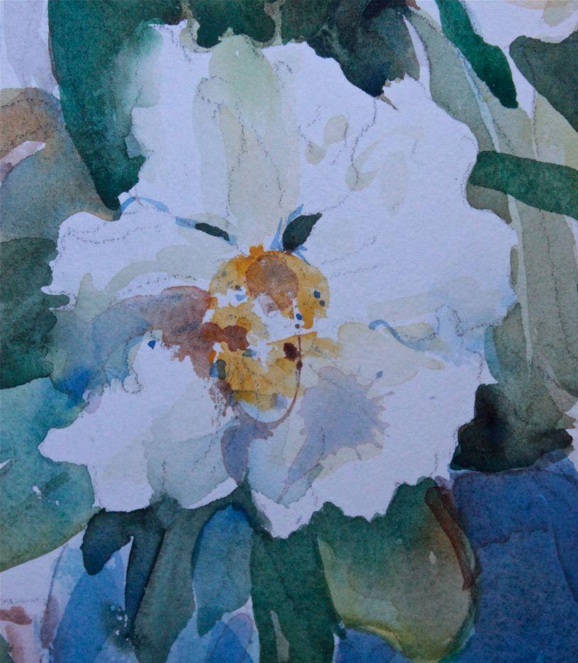 Gordonia Watercolour painting debiriley.com