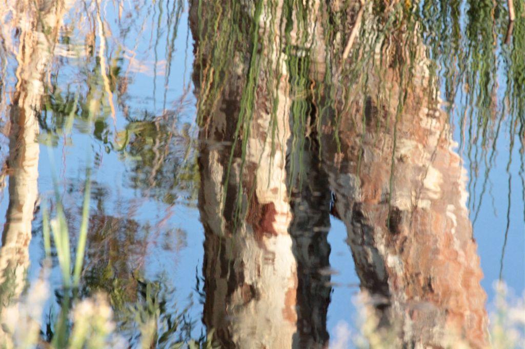afternoon pond colours debiriley.com