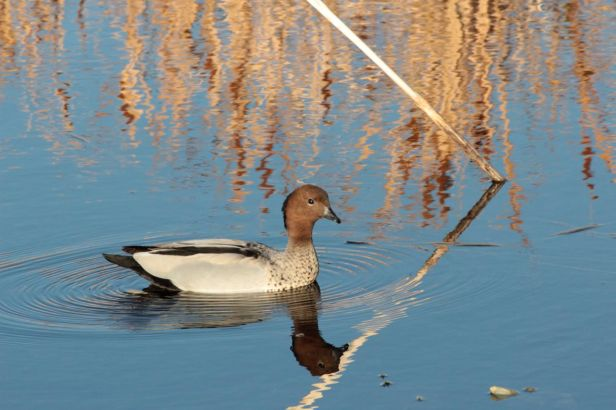 afternoon autumn walk duck pond debiriley.com