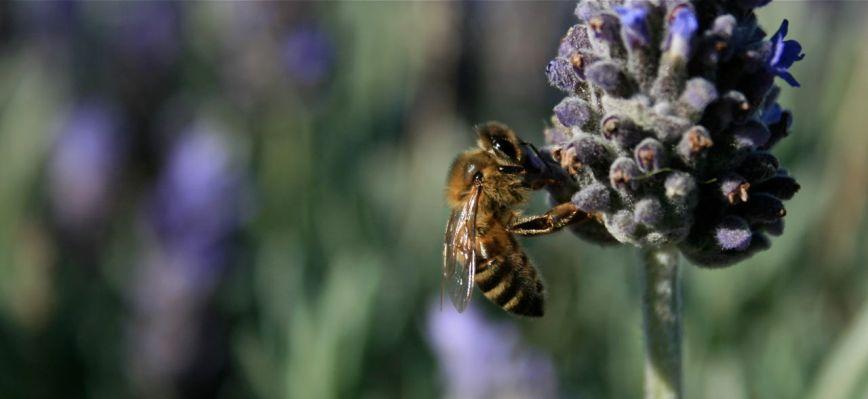 honeybee photo debiriley.com