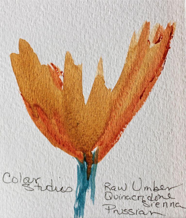 colour study flower watercolours debiriley.com