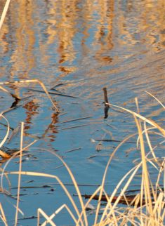 autumn reed reflections photo debiriley.com