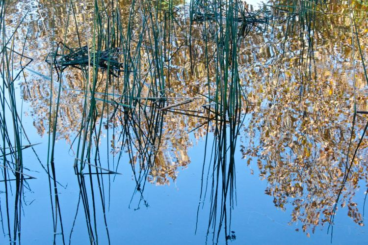 golden leaves reflections photo debirilley.com