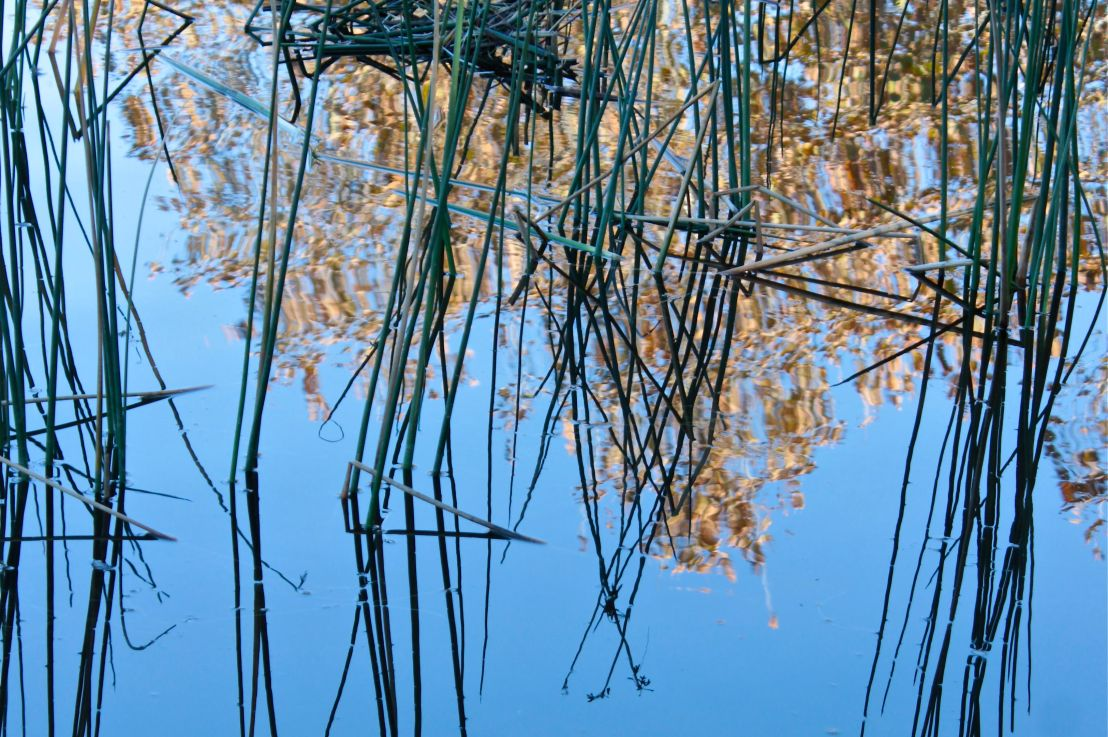 Autumn Water Reflections