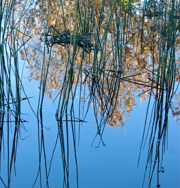 Autumn water reflections photo debiriley.com