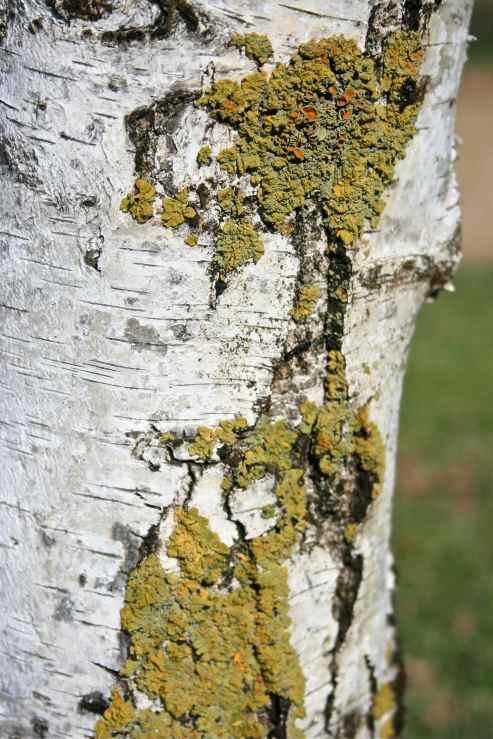 Tree Bark green lichen art photo  debiriley.com