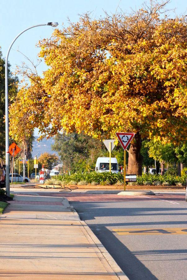 Perth autumn colours photo debiriley.com