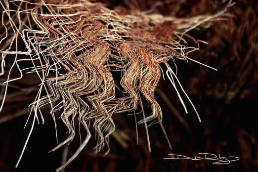 palm frond monochrom photo debiriley.com
