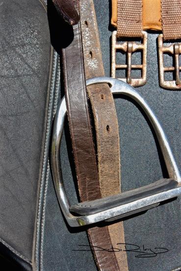 Stirrups Up  horse tack, debiriley.com