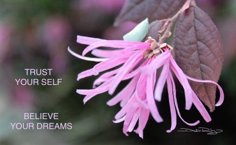flowers  debiriley.com