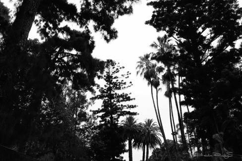 dark forest canopy photo debiriley.com