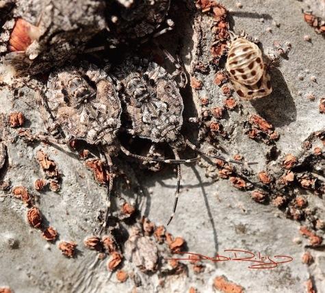 wood louse debiriley.com