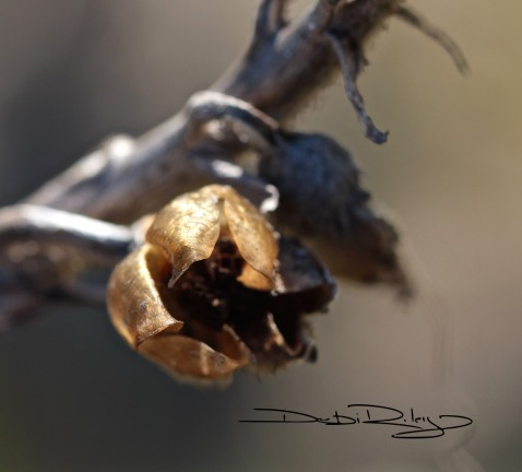 bush pod  photo debiriley.com