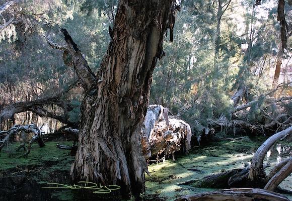 forest swamp lands photo debiriley.com