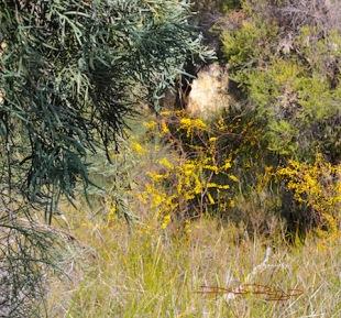 Spring Walk, Perth WA parkslands, debiriley.com