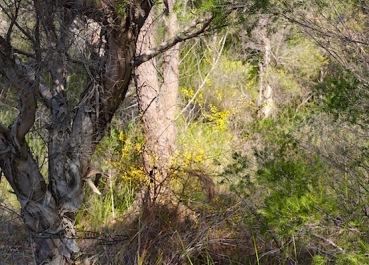 Bush Walk in Spring, Perth, debiriley.com