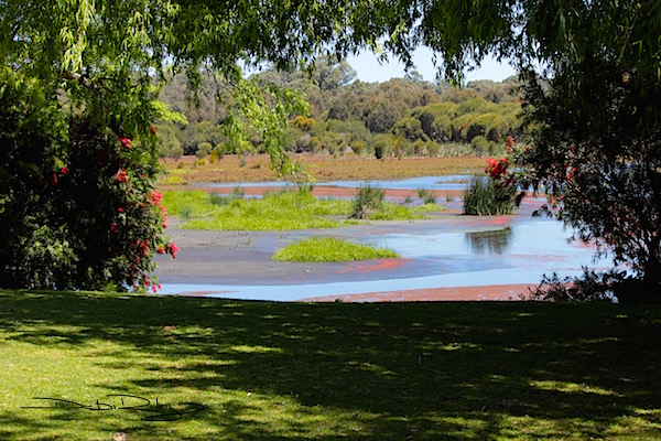 Yanchep Park, bulrushes, debiriley.com