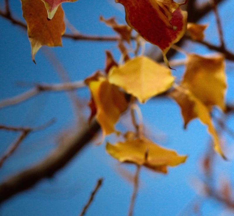 Glorious Autumn Leaves