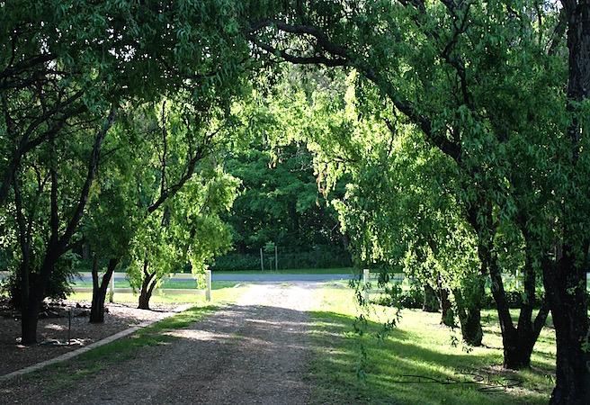 green tree grove, Waiting on a Friend debiriley.com