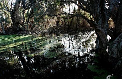 Shadows and light, friday 13th, debiriley.com