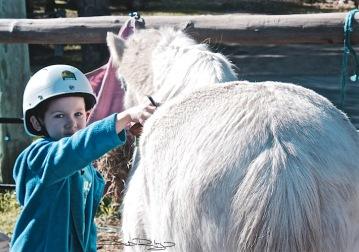 motivating methods and rewards, ponies, debiriley.com