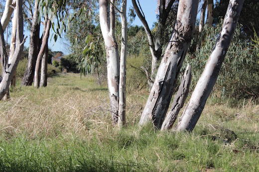landscape trees, Perth Australia, photo, debiriley.com