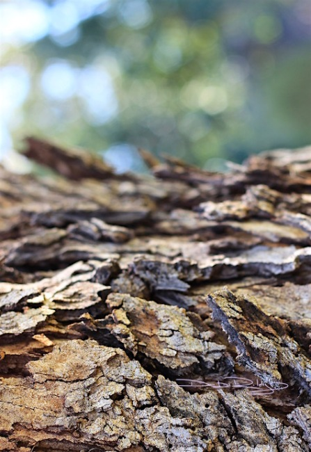 rough bark photograph, canon eos, debi riley art, art basics