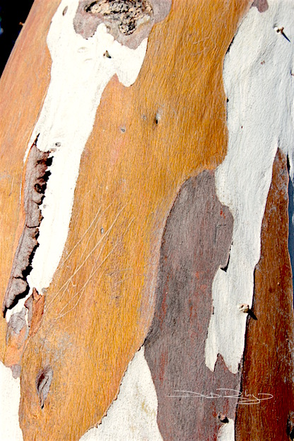 tree bark, hint of abstraction, photo, debiriley.com