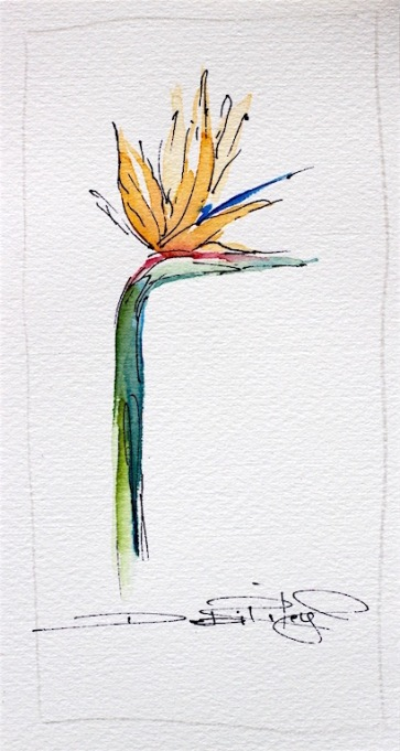 watercolor Strelitzia with ink, debiriley.com