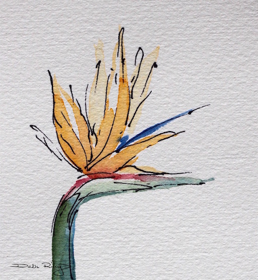 bird of paradise flower, strelitzia, watercolor and inks, debiriley.com