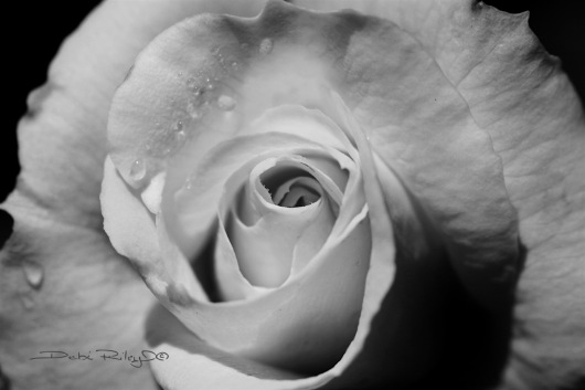 BW photo open rose, debiriley.com